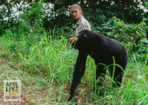 Dr Jane Goodall with Chimp at Gombe Stream NP